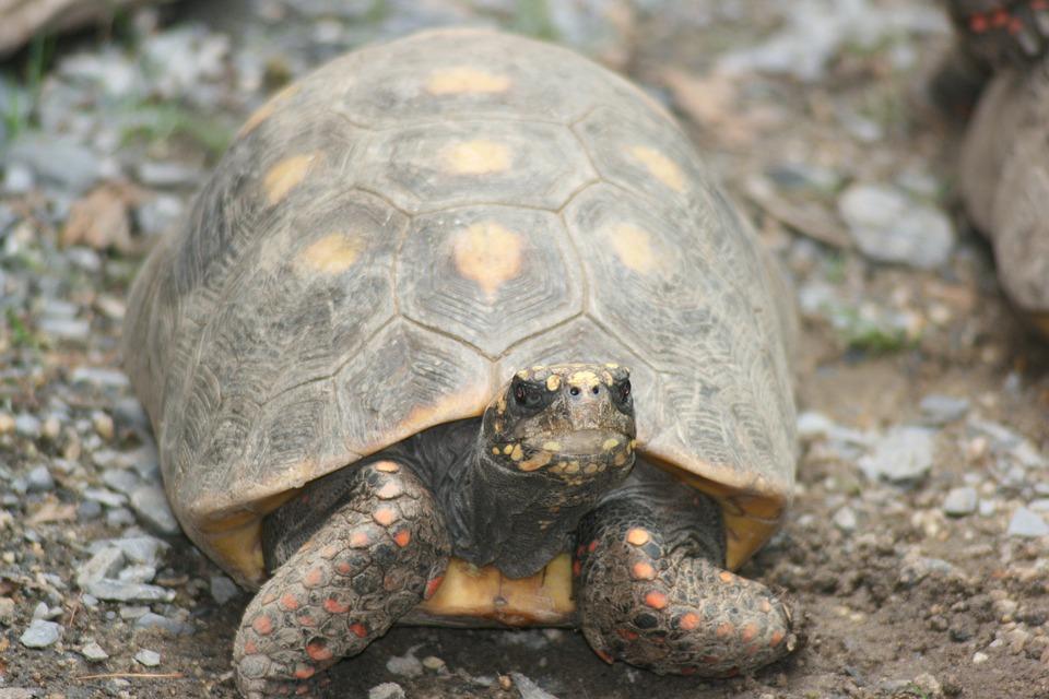 turtle-2834495_960_720