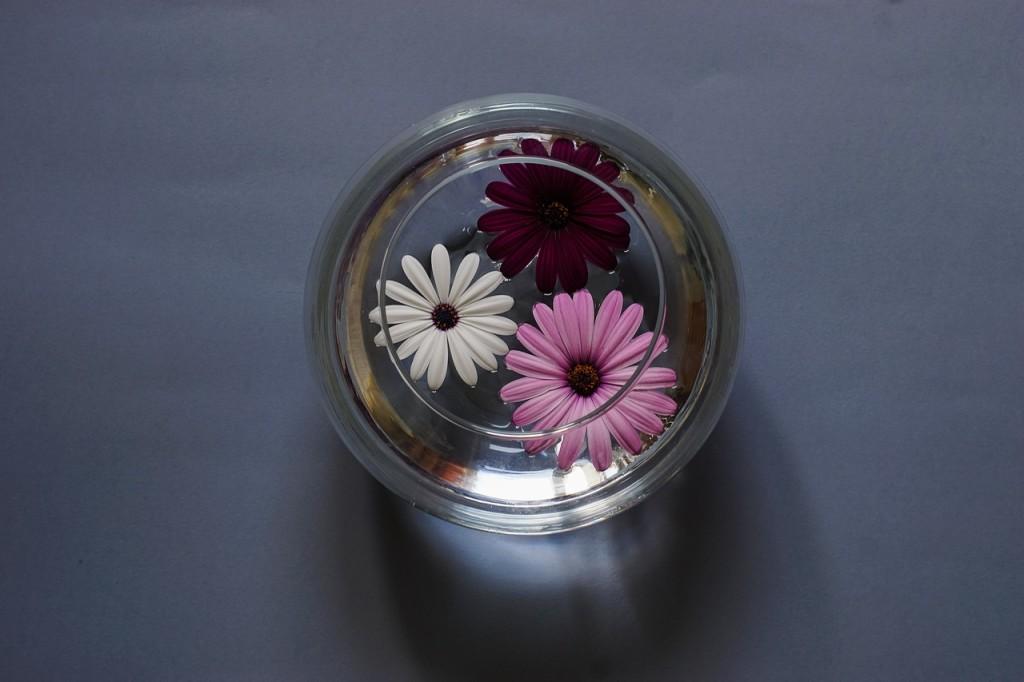 flowers_glass_water